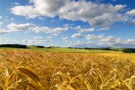 trasferirsi a vivere in campagna