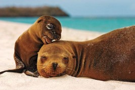 Natura Galapagos