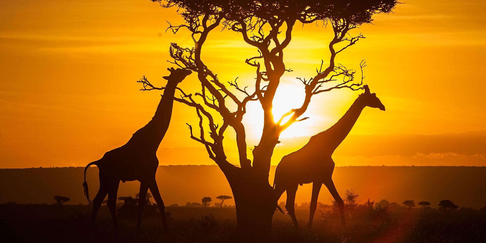 Parchi del Kenya