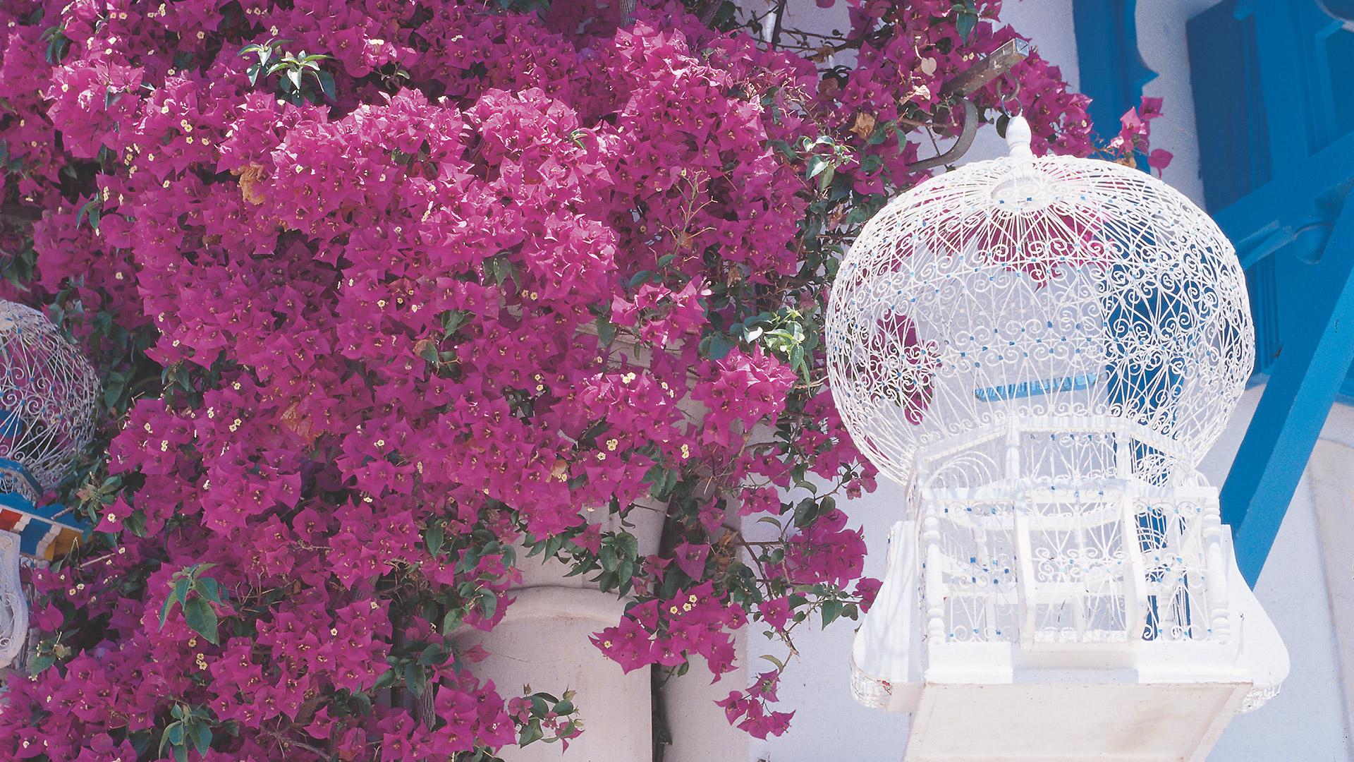 andare a vivere e lavorare in Tunisia
