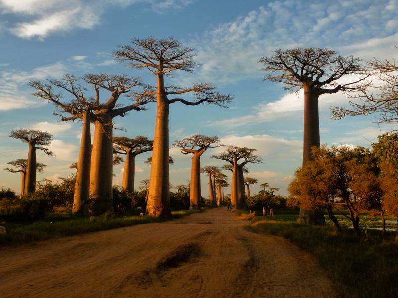 Visitare il Madagascar