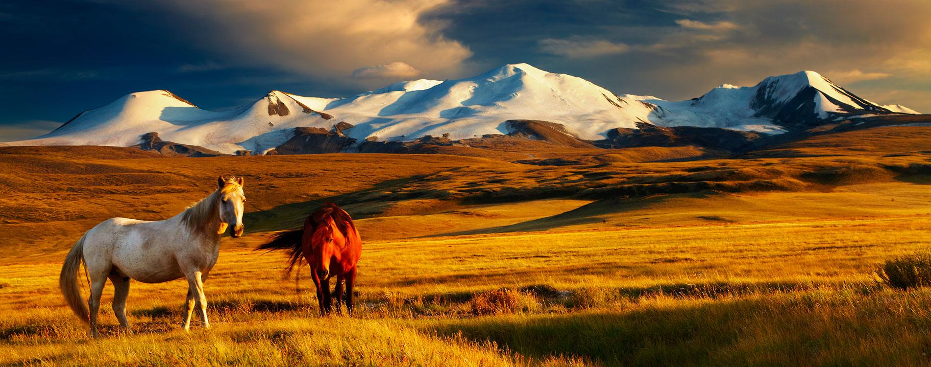 trasferirsi a vivere in Asia Mongolia