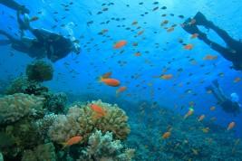 Mar Rosso immersioni