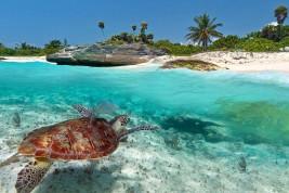 biologa marina in yucatan
