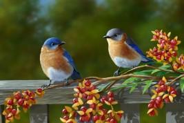 professione ornitologo