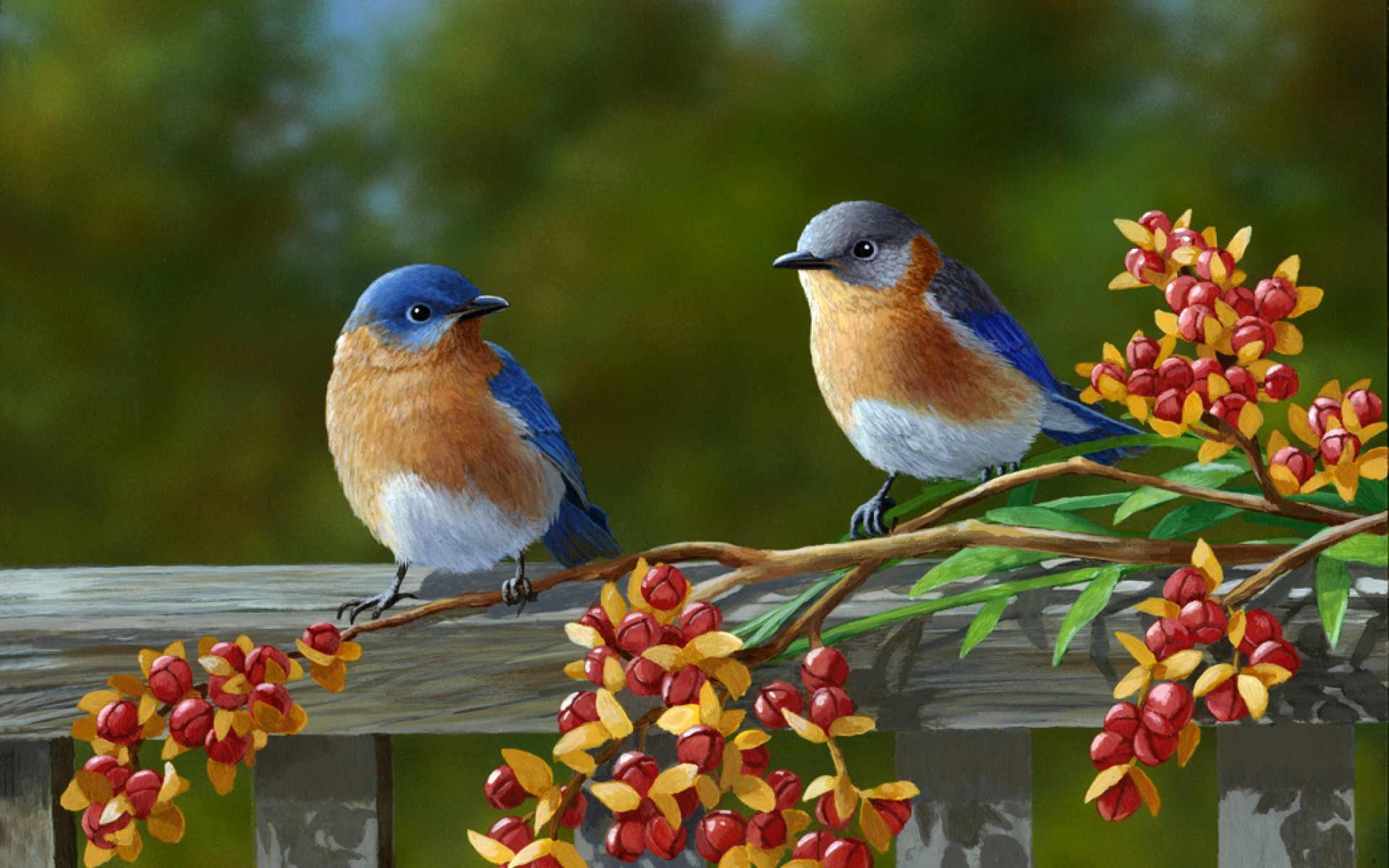 Free Bluebird Wallpaper For Desktop: Mario Muzzatti, Professione Ornitologo