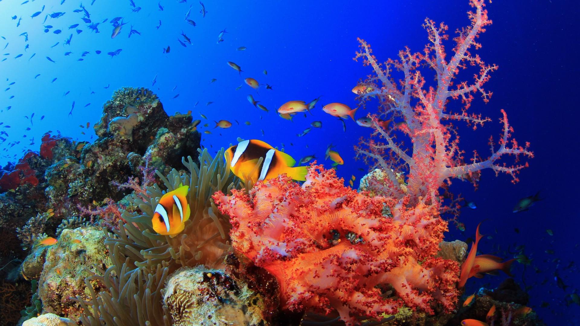 vacanze invernali sul Mar Rosso